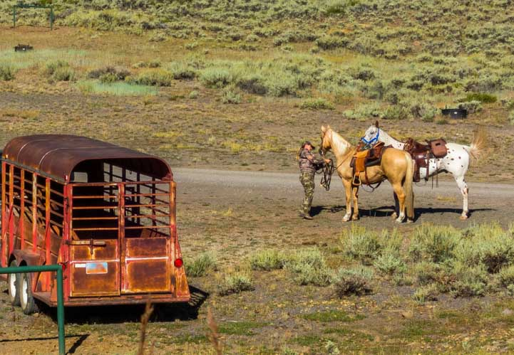 Horses preparing for a ride near Fish Lake Utah-min