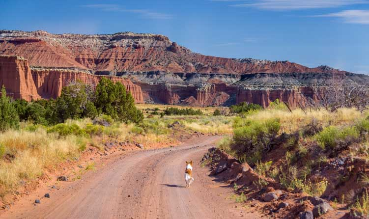 Puppy runs in Cathedral Valley Capitol Reef National Park Utah-min