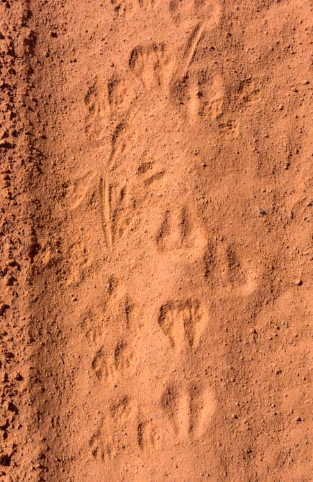 Footprints in the desert sand-min