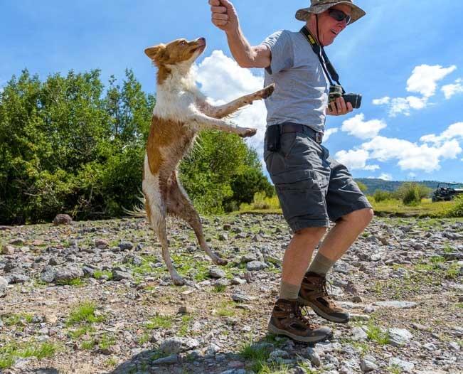 Puppy jumping-min