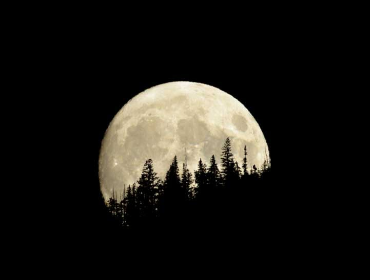 Full moon rising behind the trees-min (1)