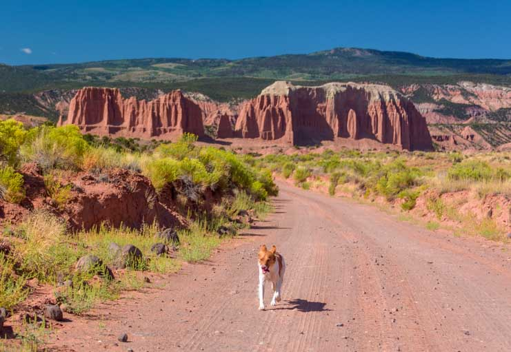 Cathedral Valley Capitol Reef National Park Utah puppy on the trail-min