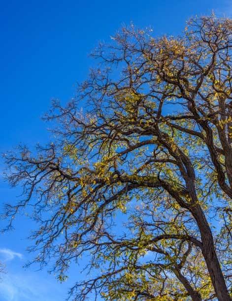 Fall colors in Williams Arizona-min