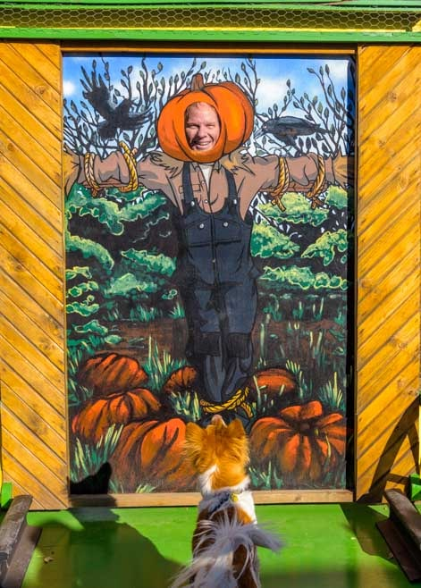 Pumpkin man and puppy-min