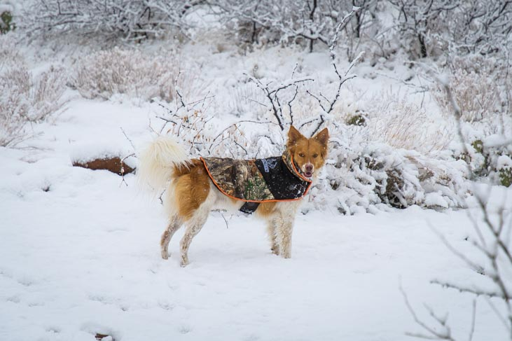 Puppy in snowjacket in the snow
