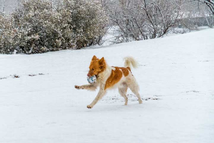 Playful puppy in the snow