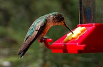 hummingbirds visit our RV in the Cinder Hills Flagstaff, AZ