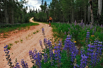 Hiking in the Kaibab National Forest North Rim Grand Canyon AZ