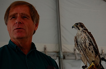 Igor, a Prairie Falcon Southwest Wildlife Foundation