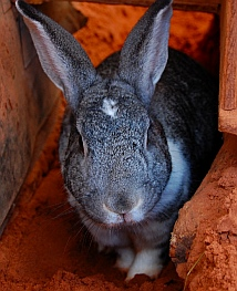 At the Bunny House Best Friends Animal Sanctuary, Kanab, Utah