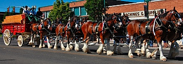 RV Full time - Budweiser Clydesdales, Cedar City, UT where we boondock in our fifth wheel RV
