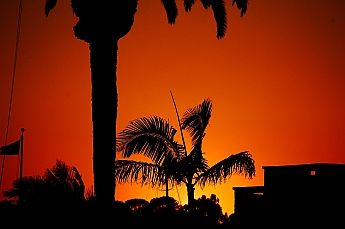 Sunset in the palm trees in San Diego