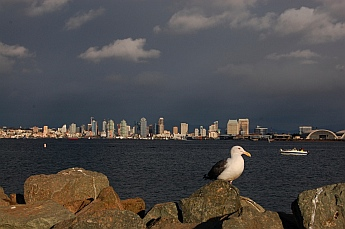 San Diego city skyline seen from Shelter Island