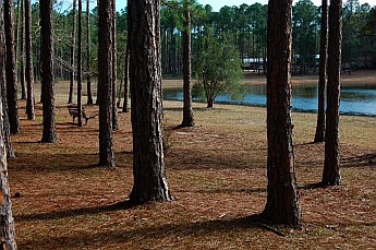 Pine Log State Park Panama City Florida