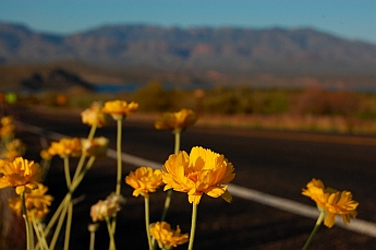 Roosevelt Lake Arizona Tonto National Forest Campgrounds wildflowers