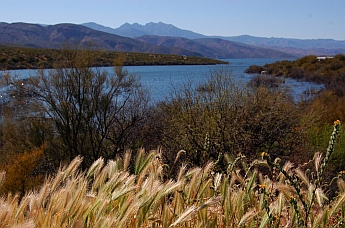 Roosevelt Lake Arizona Tonto National Forest Campgrounds