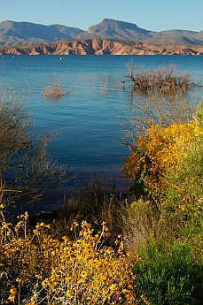 wildflowers Roosevelt Lake Arizona