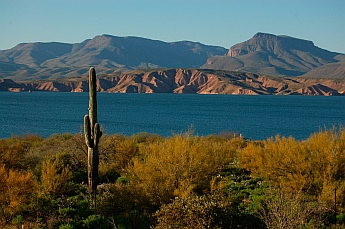 Saguaro cactus Roosevelt Lake Arizona