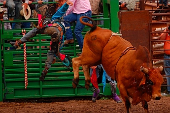 Bull riding Helmville Rodeo