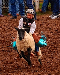 Mutton busters Helmville Montana Rodeo