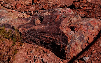 Petrified log at Valley of Fire State Park