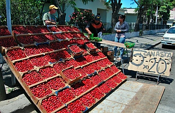 Strawberries for sale in Ensenada, Mexico