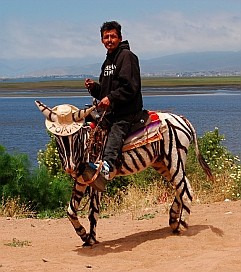 A pony painted like a zebra for tourists