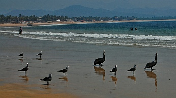 birds on the beach in Chamela