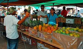 Sunday Farmer's Market in Loreto, Baja California Sur, Sea of Cortez, Mexico