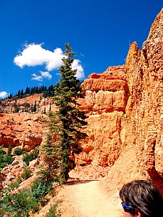 Hiking path on Cascade Falls hike, Dixie National Forest, Utah