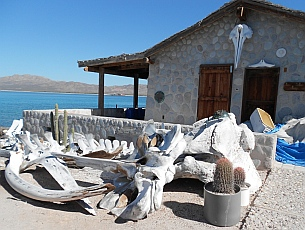 Whale museum, Isla Coyote, BCS, Sea of Cortez, Mexico.