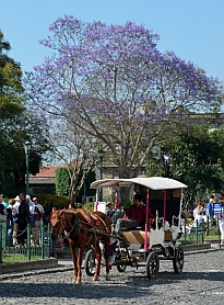 Horse drawn carriage in Antigua, Guatemala