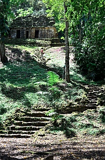 Yaxchilan & Bonampak Tour - Green moss clings to everything.
