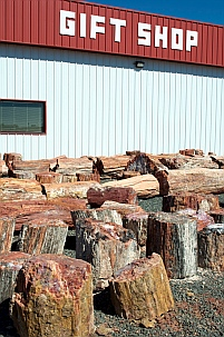 Jim Gray's Petrified Wood Company has lots of petrified wood for sale.