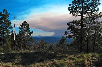 Smoke from the Gladiator Fire approaches the Mogollon Rim.