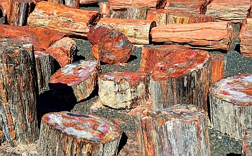 Petrified wood logs ready for splitting at Jim Gray's Petrified Wood Company, Holbrook, Arizona.