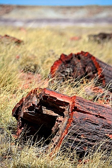 Petrified logs at Petrified Forest National Park, Arizona.