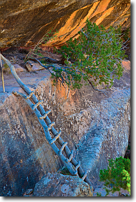 A wwoden ladder on the Sipapu Bridge trail.