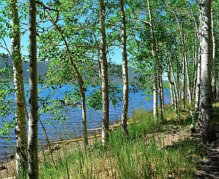 Fish Lake seen through aspens, Utah.