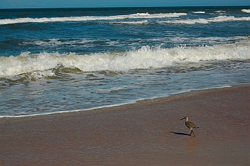 Birds on the seashore Daytona Beach Florida